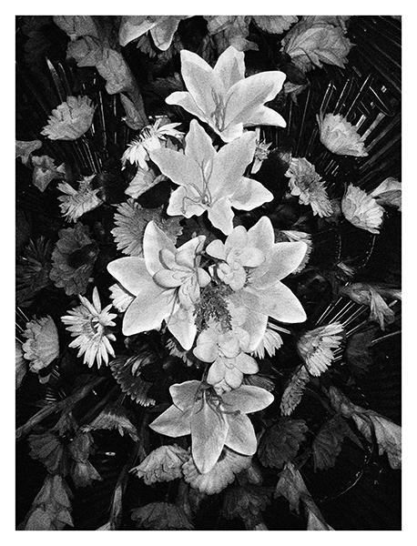 http://www.johan-attia.com/files/gimgs/37_flowers3.jpg