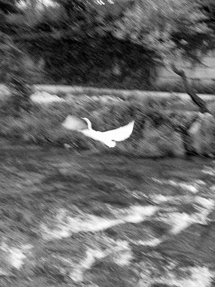 http://www.johan-attia.com/files/gimgs/38_bird_v2.jpg