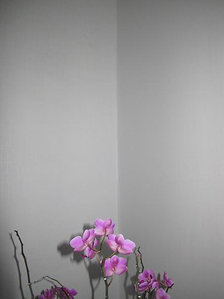 http://www.johan-attia.com/files/gimgs/38_orchidee1.jpg